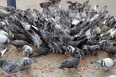 Tauben füttern - p347m1138352 von Georg Kühn