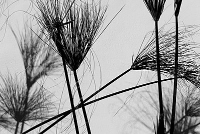 Grasses - p548m911676 by Fred Leveugle