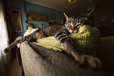 Tabby cat relaxing on couch - p300m1166694 by Ramon Espelt