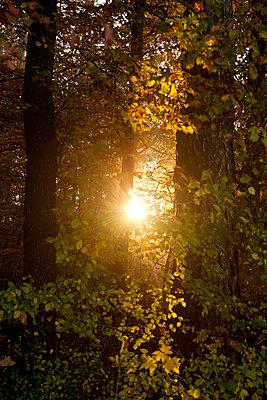 Sonnenstrahlen im Laubwald - p533m1111585 von Böhm Monika