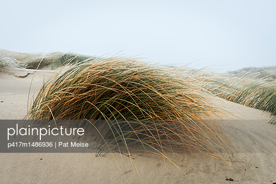 Dünengras - p417m1486936 von Pat Meise