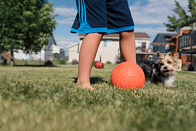 Low section of boy with Yorkshire Terrier standing by ball at backyard - p1166m1543120 by Cavan Images