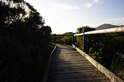 South Africa, Boardwalk in the landscape - p1640m2244961 by Holly & John