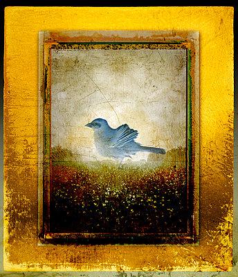 Blauer Vogel - p1693m2291585 von Fran Forman