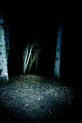 Forest path at night - p248m859149 by BY