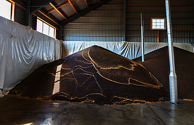 Grains in barn - p312m2092050 by Pernille Tofte