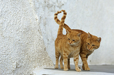 Two cats in Greece - p3300468 by Harald Braun
