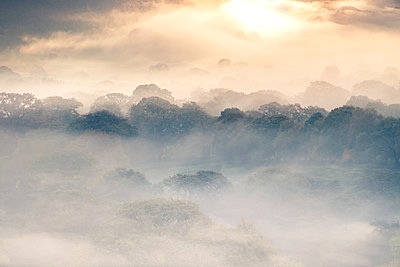 Misty Morning at day break - p1280m1477461 by Dave Wall