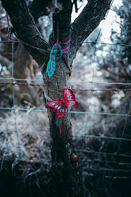 A self-made butterfly from fabric on a tree trunk - p1681m2283600 by Juan Alfonso Solis