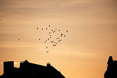 Evening - p5864042 by Kniel Synnatzschke