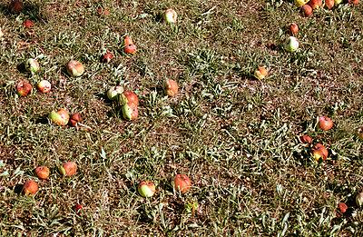 Verdorbenes Obst - p0090063 von Erwinowitch