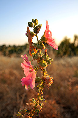 Flower - p1468m1559197 by Philippe Leroux