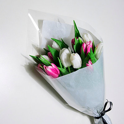 Tulips - p2686936 by Clara Ritz