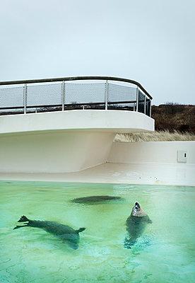 Seals - p1132m1039995 by Mischa Keijser
