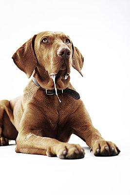 Dog collar - p4030580 by Helge Sauber
