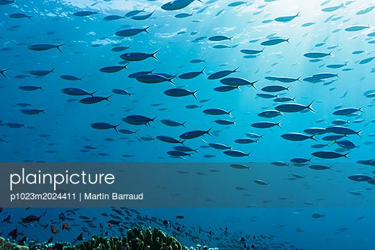 p1023m2024411 von Martin Barraud