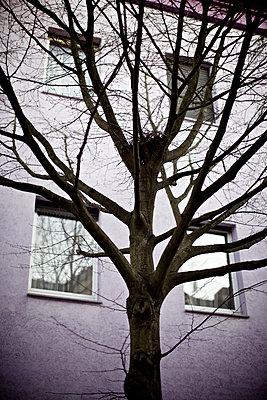 Kahler Baum vor einem Mietshaus in der Dämmerung - p586m972956 von Kniel Synnatzschke