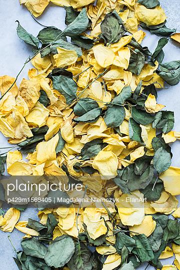 p429m1569405 von Magdalena Niemczyk - ElanArt