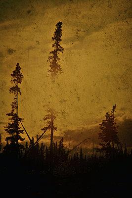 Bäume - p148m1034787 von Axel Biewer