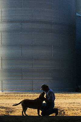 Agriculture, A farmer plays with his dog at the end of the work day, with grain bins in the background, near Hoffman, Minnesota, USA. - p442m936679f by Steve Woit