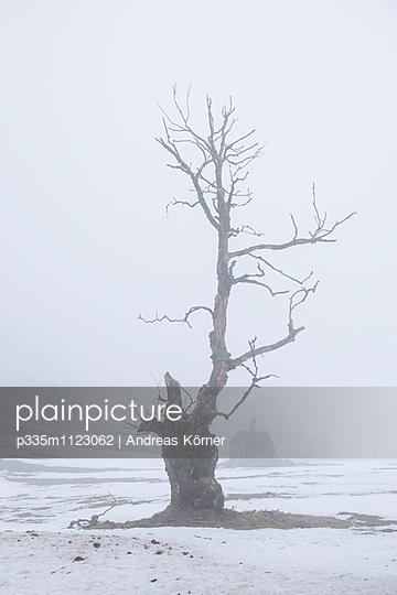 Toter Baum - p335m1123062 von Andreas Körner
