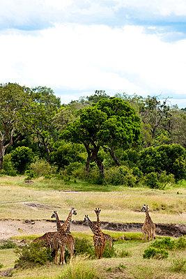 Kenya - p5330422 by Böhm Monika