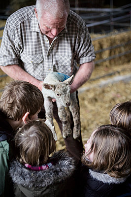Children and new-born lambs in a lambing shed. - p1100m906712f by Emily Hancock
