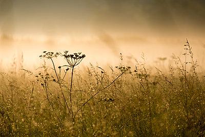 Early morning fog at Spandauer Rieselfelder - p739m1467965 by Baertels