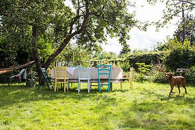 Hund läuft durch den Garten - p788m1165301 von Lisa Krechting