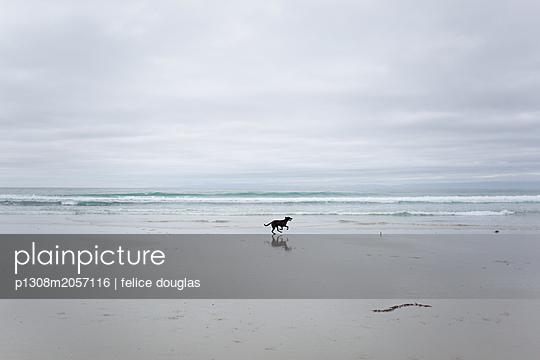 Hund am Strand - p1308m2057116 von felice douglas