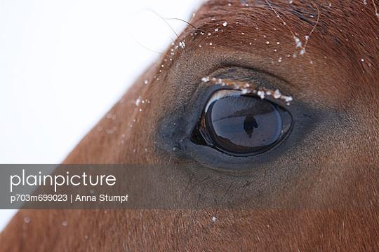 Horse detail - p703m699023 by Anna Stumpf