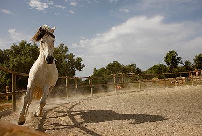 Rennendes Pferd - p2260081 von Sven Görlich