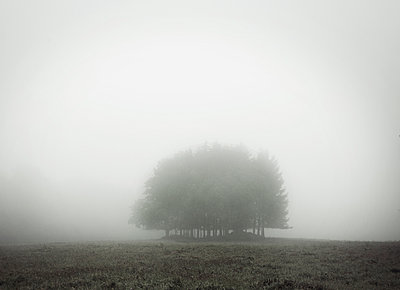 Fog - p992m946229 by Carmen Spitznagel