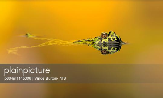 p884m1145396 von Vince Burton/ NIS