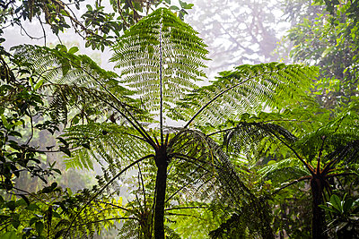 Monteverde Cloud Forest Reserve, Puntarenas, Costa Rica - p871m2032129 by Matthew Williams-Ellis