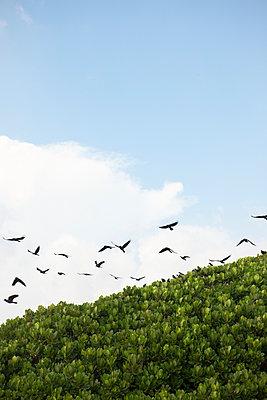 Flock of birds - p795m1031504 by JanJasperKlein