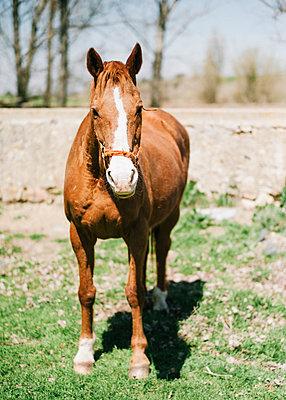 Braunes Pferd  - p1085m1426009 von David Carreno Hansen