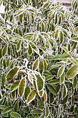 Frost - p2686960 von Christof Mattes