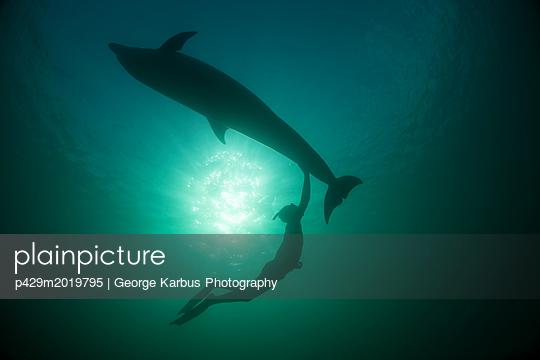 p429m2019795 von George Karbus Photography