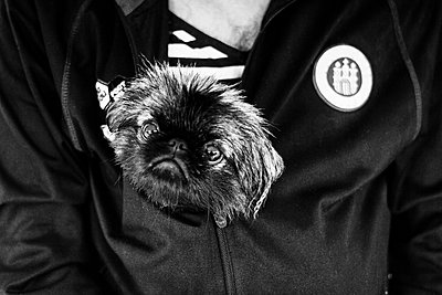 Dog in the jacket - p858m853017 by Lucja Romanowska