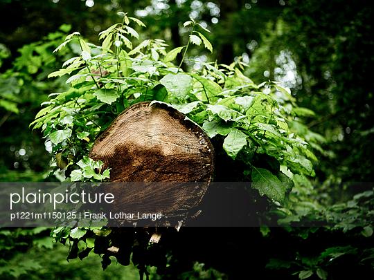 Baumstamm mit jungen Trieben - p1221m1150125 von Frank Lothar Lange