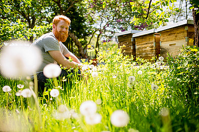 Portrait happy man with beard gardening in sunny garden - p301m2075688 by Sven Hagolani