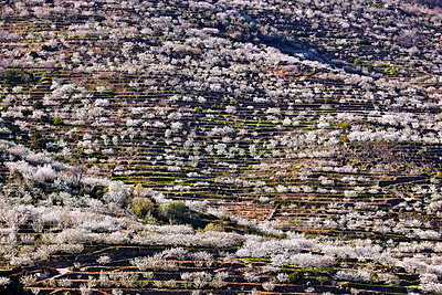 Cherry blossom in Jerte valley - p719m1563575 by Rudi Sebastian