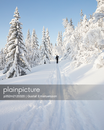 Man skiing by snow covered trees - p352m2120320 by Gustaf Emanuelsson