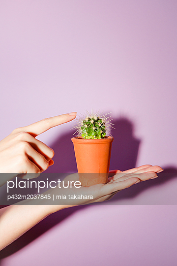Frauenhand hält kleinen Kaktus - p432m2037845 von mia takahara