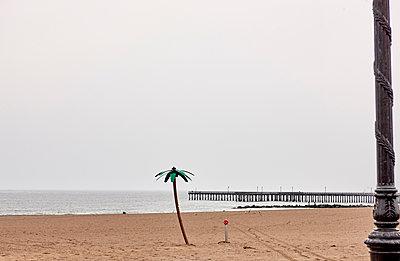 Artificial palm on the beach, Coney Island, New York - p1299m2244641 by Boris Schmalenberger