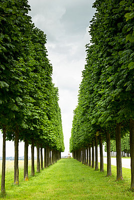 Tree perspective - p445m1153160 by Marie Docher