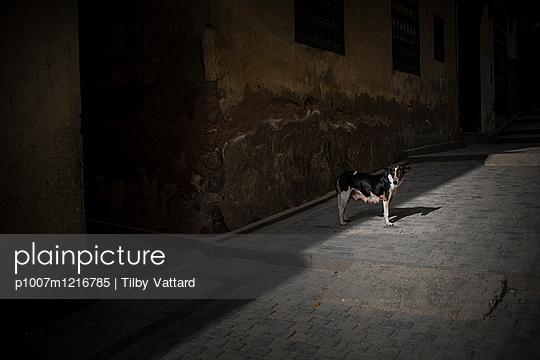 Ein Hund auf einer Straße - p1007m1216785 von Tilby Vattard