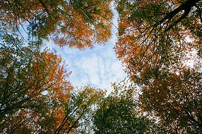 Treetops - p1078m831088 by Frauke Thielking