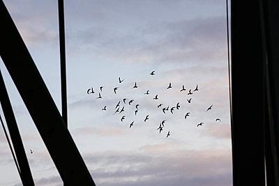 Vogelschwarm - p1357m1462761 von Amadeus Waldner